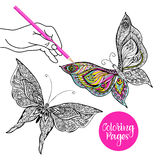 Butterfly Color Illustration Stock Photo
