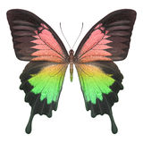 Butterfly colorful Stock Photography