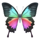 Butterfly colorful Royalty Free Stock Image