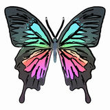 Butterfly colorful Stock Image