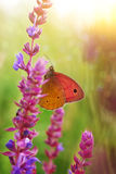 Butterfly. Colorful butterfly on a blue wildflower Stock Photos