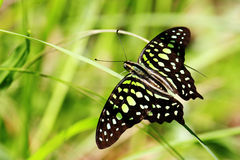 Butterfly. Colorful cube fly little natural pretty dark point spring life Stock Image