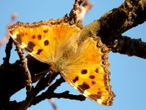 Butterfly. Colorful butterfly with open wings on the branch Stock Photos