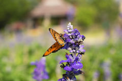 Butterfly on a colorful purple flower,against a blurred backgrou. Nd Royalty Free Stock Image