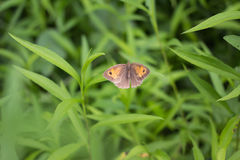 Butterfly. A colorful butterfly resting on green grass Stock Image