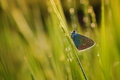 Butterfly. Colorful butterfly in a spring meadow Stock Photography