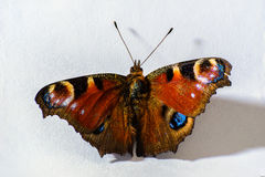 Butterfly. Colorful butterfly on white paper Stock Photo