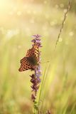 Butterfly. Colorful butterfly on the wildflower Stock Photography