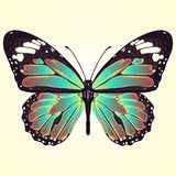 Butterfly with colorful wings, view from above, isolated on light yellow background. Vector illustration, banner, card, poster, fl Stock Photography