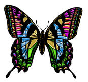 Butterfly colors Royalty Free Stock Photography