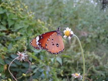 Butterfly. Colours of nature Royalty Free Stock Images