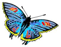 Butterfly colurful illustration Royalty Free Stock Photography
