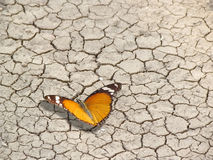 Butterfly on cracked earth, life and death. A viceroy beautiful butterfly sits on a cracked, dead and dry land royalty free stock photo