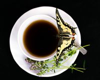 Butterfly and cup. Stock Image