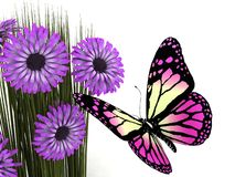 Butterfly and daisy Stock Images
