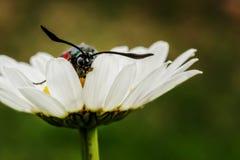 Butterfly in daisy. stock photo