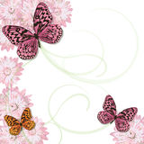 Butterfly and daisy Invitation Frame Royalty Free Stock Image