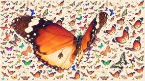 Butterfly of Danaus chrysippus