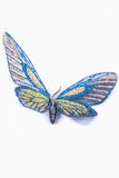 Butterfly decorative blue and yellow isolated on a white backgro Stock Image
