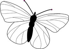 Butterfly Design Stock Photos