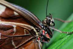 Free Butterfly Detail Stock Photo - 10874820