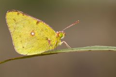 Butterfly with dew morning Royalty Free Stock Photos