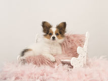 Butterfly dog puppy sitting on a doll bench on a pink fur. On a white background stock photography