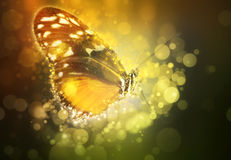 Butterfly in a dream. Fantasy tropical butterfly appearing in dreams