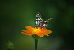 Butterfly dreaming Royalty Free Stock Photography