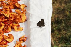 Butterfly and dried apples. Sliced Dried Apples