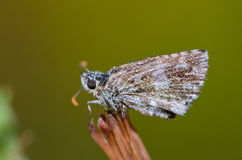 Butterfly is dried on the grass Stock Photos