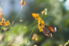 Butterfly eat syrup from flower stock photos