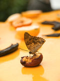 Butterfly eating banana Stock Photo