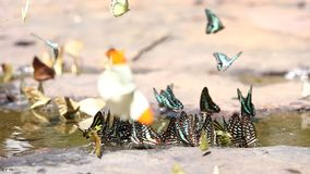 Free Butterfly Eating In Nature, Daylight. Stock Photos - 124904263