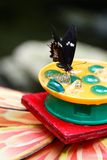 Butterfly eating some ice. On a garden royalty free stock image