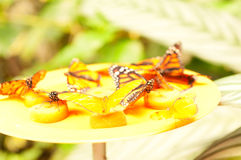 Butterfly is eating sugar Royalty Free Stock Photo
