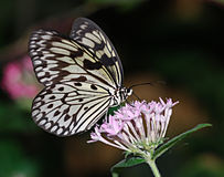 Butterfly Effect Stock Images