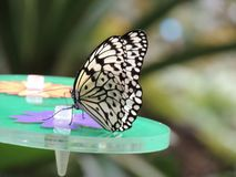 The butterfly effect royalty free stock image
