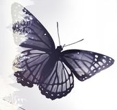Butterfly Effect stock photos