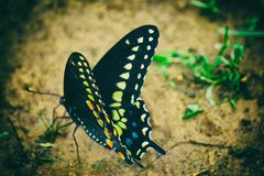 Butterfly effect. Ohio country side Royalty Free Stock Photo