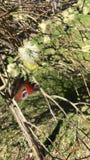 Butterfly effect, Vaterstetten, Bavaria stock footage