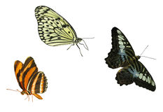 Butterfly elements. Three isolated butterflies royalty free stock images