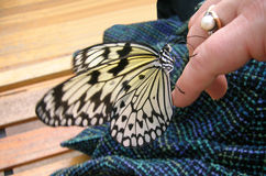 Butterfly Encounter. Butterfly landed on woman's finger Stock Photography