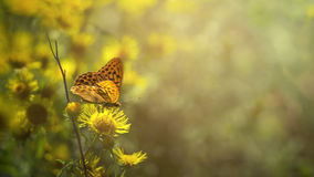 Butterfly enjoying the morning sun on top of the flower royalty free stock photos