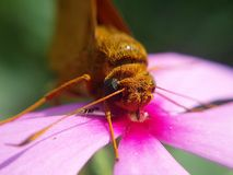 Butterfly. Eye wing flower leg whisker royalty free stock photo