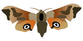 Butterfly eyed hawk moth Royalty Free Stock Photography