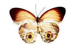 Butterfly with eyes. Butterfly with eye pattern to ward off predators Stock Images