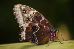 Butterfly eyespots stock images