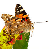 Butterfly on a fabric Royalty Free Stock Image