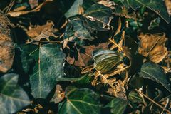 A butterfly among fallen leaves royalty free stock photo